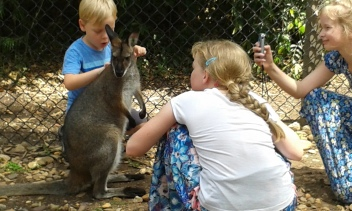 A friendly Wallaby with SuperBoy and sisters